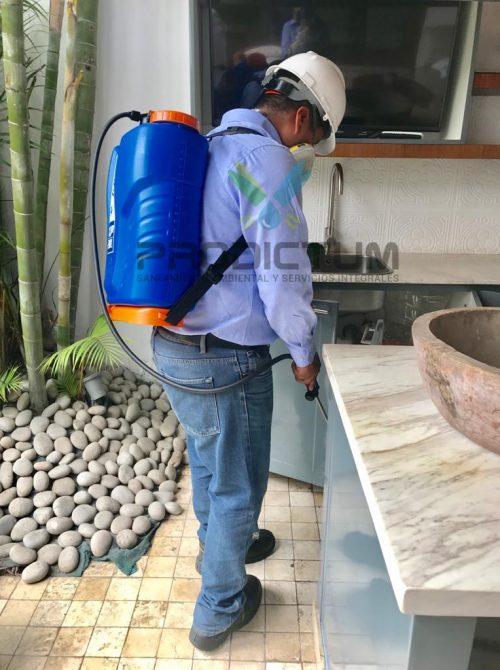 realizando servicio de fumigacion de casas